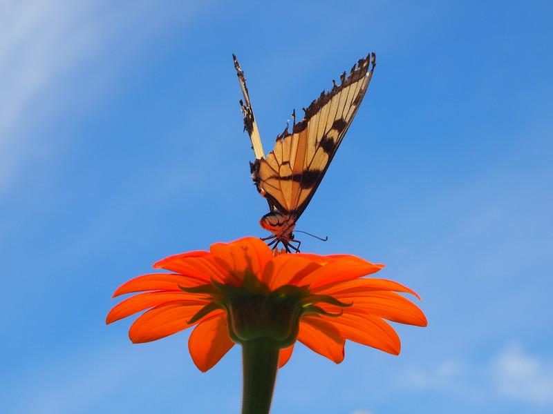 Gravity Hill butterfly.JPG