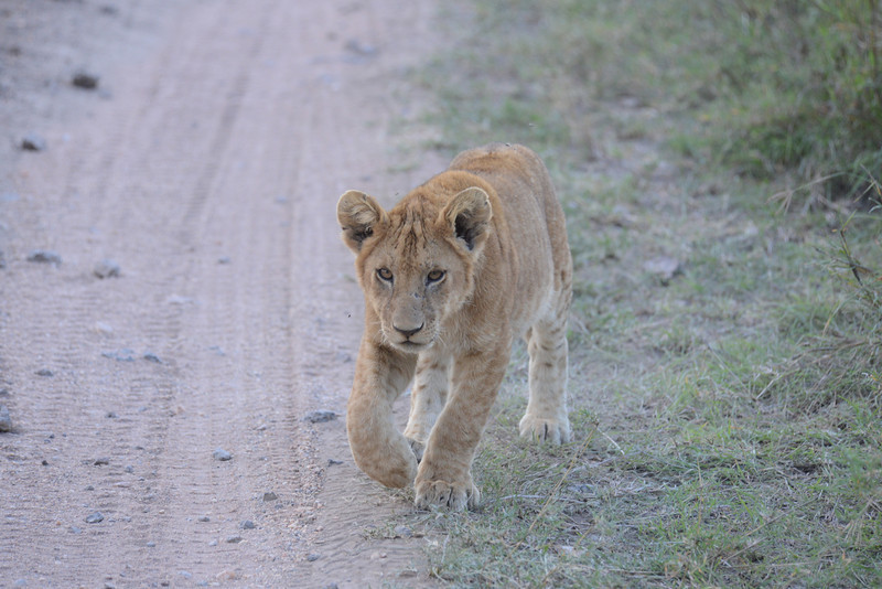 East Africa Safari 358.jpg