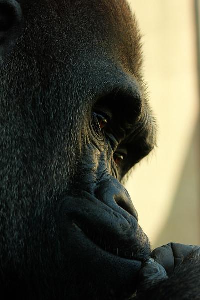 Philadelphia Zoo 469.jpg