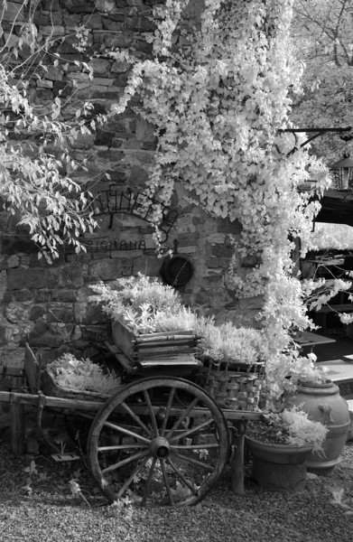Cart1 16x24 A sharp.jpg