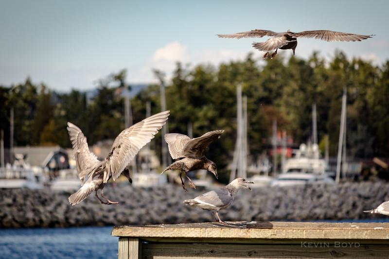 a twitter of seagulls 2.jpg