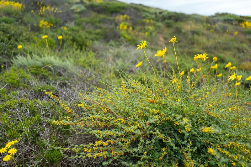 Spring Flowers A-302.jpg