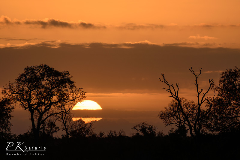 Sunscape With Tree Silhouette