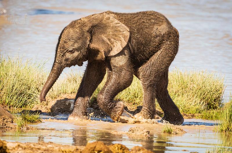 Baby Elephant 4