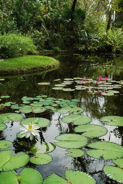 McKee Botanical Garden087 copy.jpg