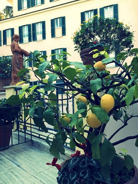 our-terrace-has-a-lemon-tree_15988699127_o.jpg