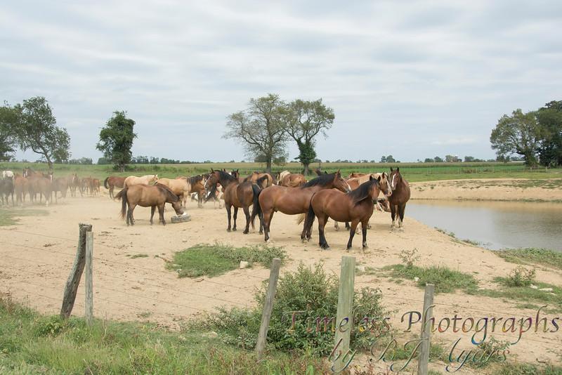 2014_Horses_Woodstown.jpg