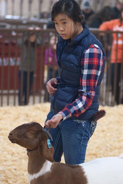 kay_county_showdown_goats_20191207-169.jpg