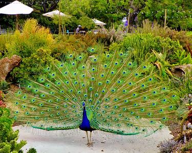 L.A., Arboretum