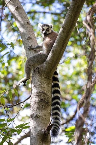 Madagascar_2013_FH0T1242.jpg