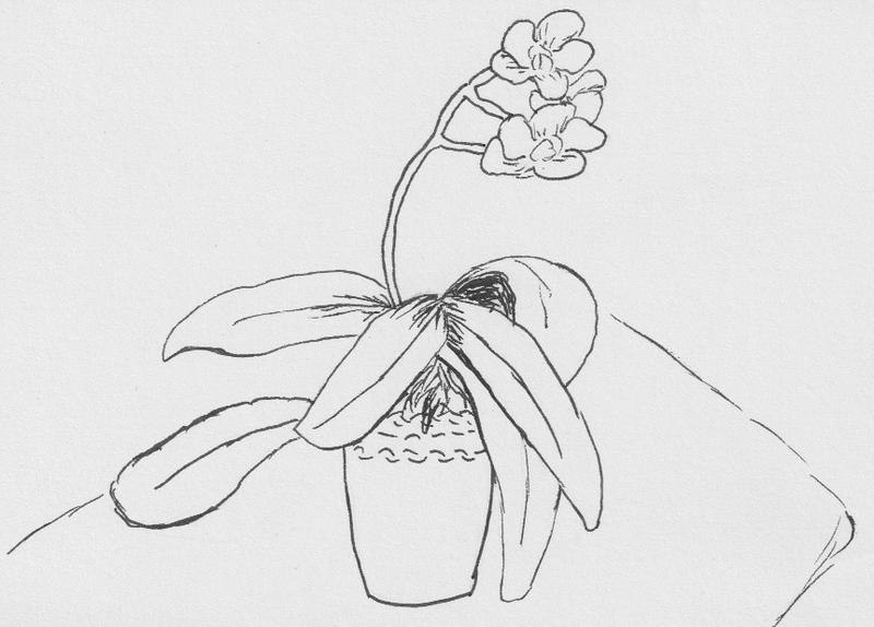 Phalaenopsis, 2020