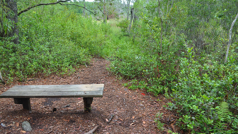 Bench overlooking sawgrass marsh