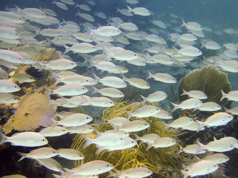 islamorada-diving-52.jpg