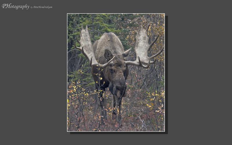 My Alaska 12-08-046.jpg