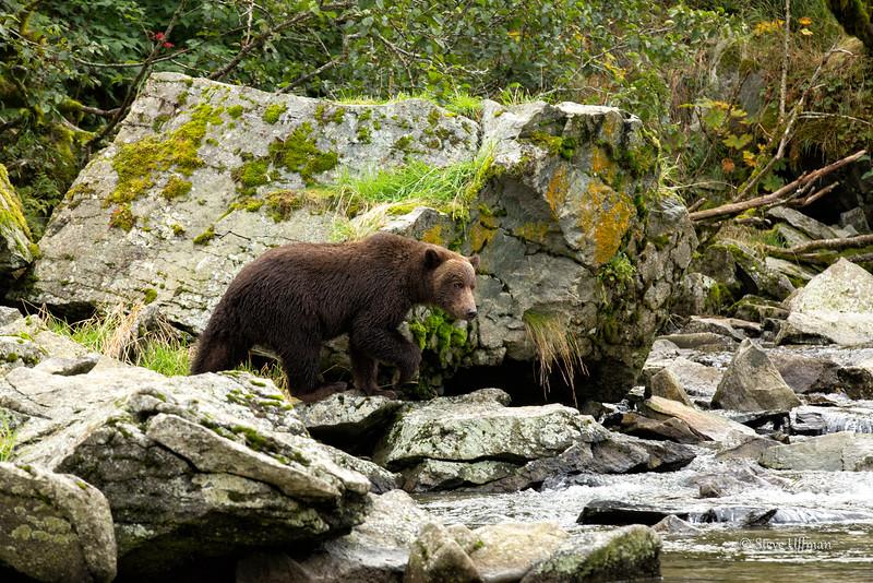 20140905-_Q2C0940Katmai-Bears-Kuliak-Edit-Edit.jpg