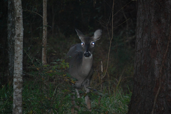 Journal Site 138: Creole Nature Trail, Southwestern, LA - Nov 5, 2009