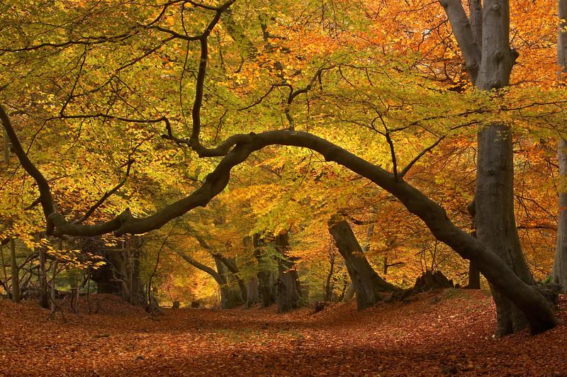 120 Ashridge Autumn.jpg