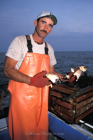 s45 Stone Crab Fisherman, Everglades
