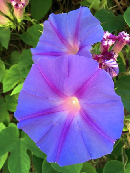 galt flower.jpg