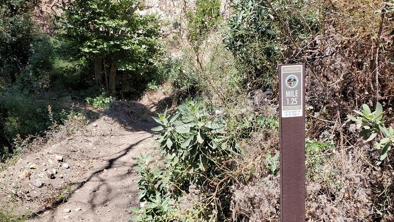 20190810017-Los Pinetos trailwork.jpg