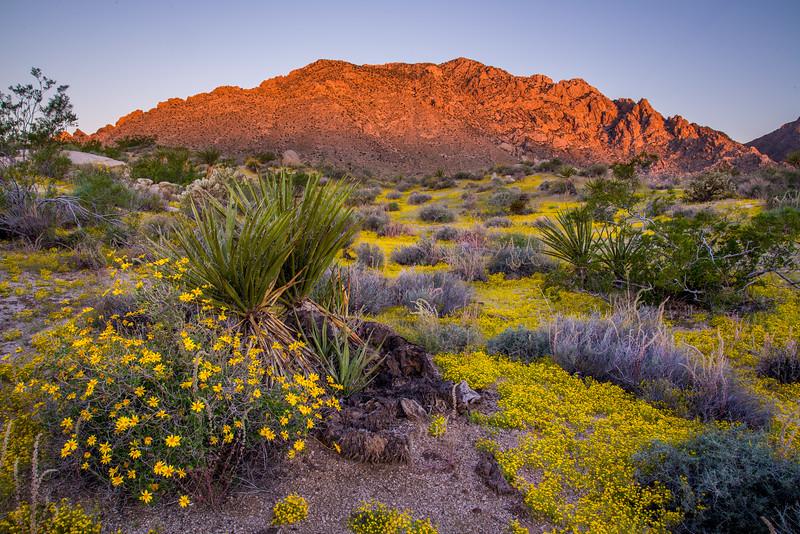 Mojave Monsoon Bounty