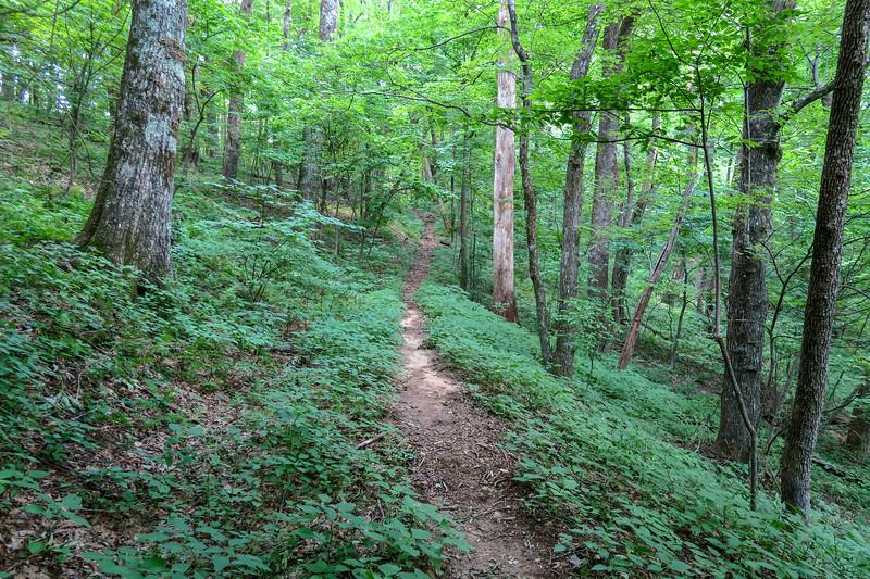 Barnett Branch Trail -- 3,850'