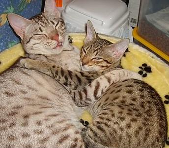 cuddles dem ana.jpg