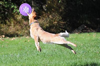 H2D2 Barktoberfest Disc Dogs, October 21-22, 2017