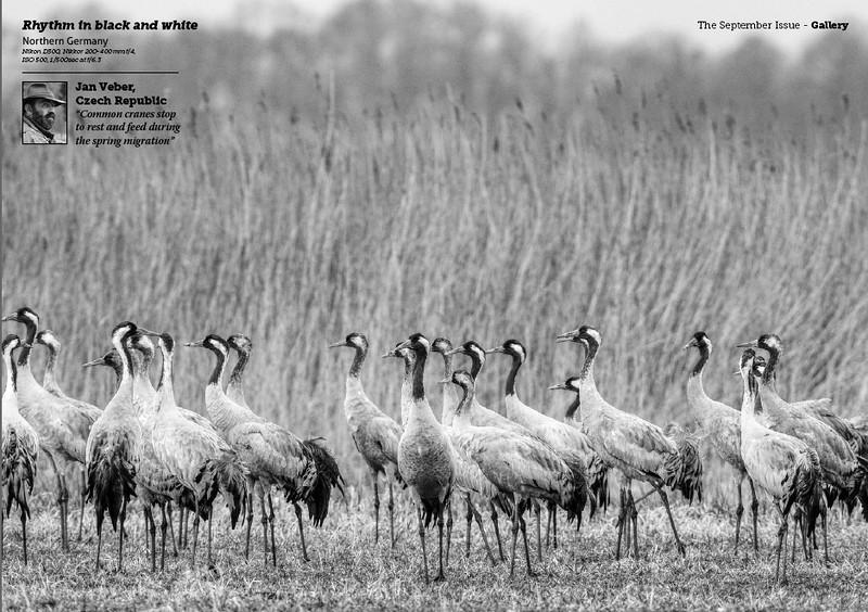 JanVeber-Cranes.jpg