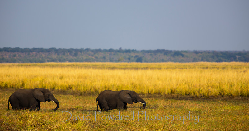 2 elephants in Botswana.