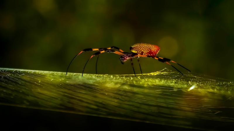 Spiders-Arachnids-101.jpg