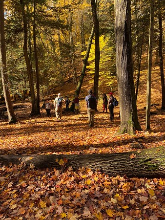 20201023 Tree Hike