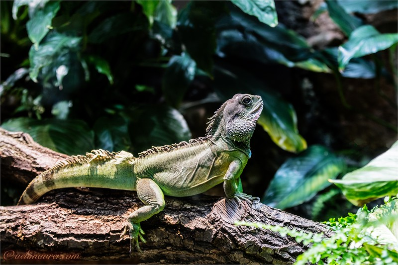 2016-10-05 Zoo Basel0U5A0631-Bearbeitet.jpg
