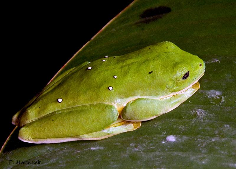 greenfrog2994.jpg