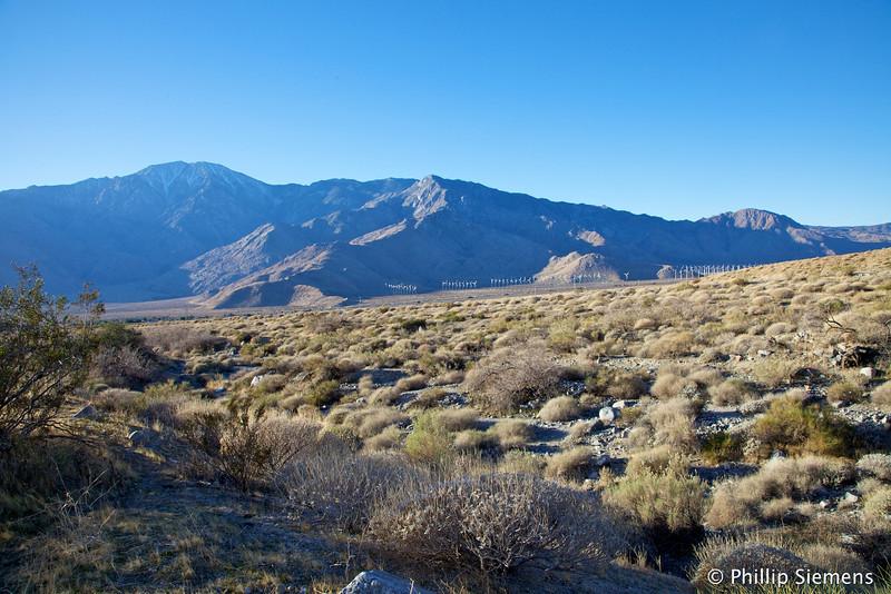 Windmills and Mt. San Jacinto
