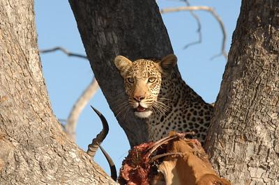 Back From Botswana 8-2011