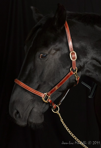 Laila-Pony