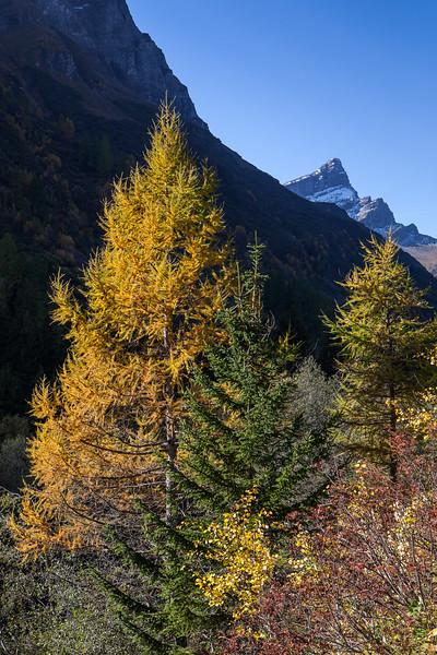 Herbst-im-Rheinwald-D-Aebli-053.jpg