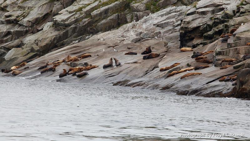 Alaska Kenai Fjords0104.JPG