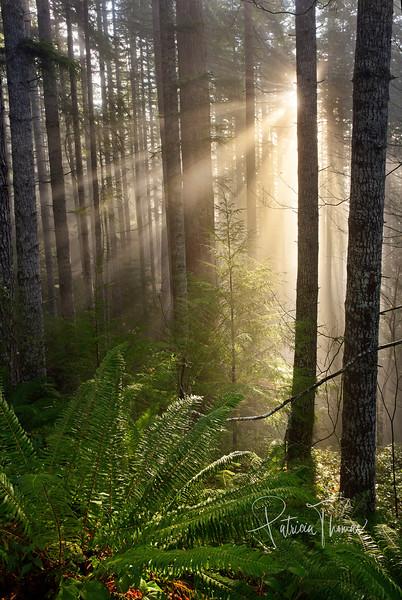 forest sun rays 1 large wm.jpg