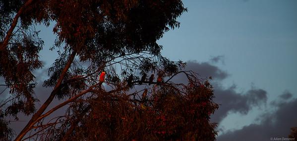 20171123 Nati Birds Sunset