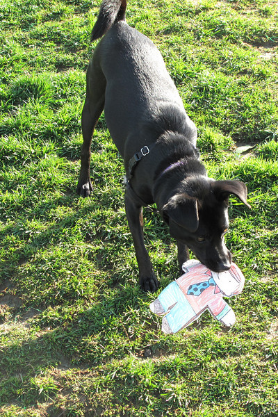 Flat Stanley plays at the dog park. (Stunt double)