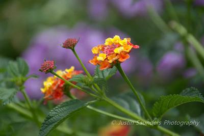 Denver Botanic Garden 2014