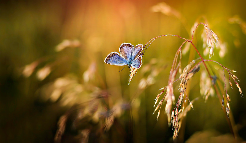 Butterfly-082.jpg