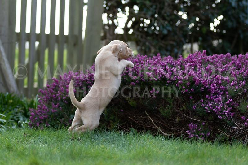 Weika Puppies 24 March 2019-6358.jpg