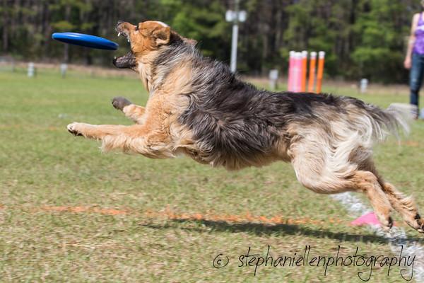 _MG_3241Up_dog_International_2016_StephaniellenPhotography.jpg