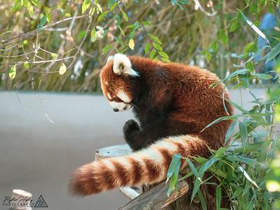 San Diego Zoo - 02-15-2020