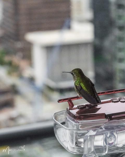 2021 - The Hummingbird Chronicles-2205_edit-2.jpg