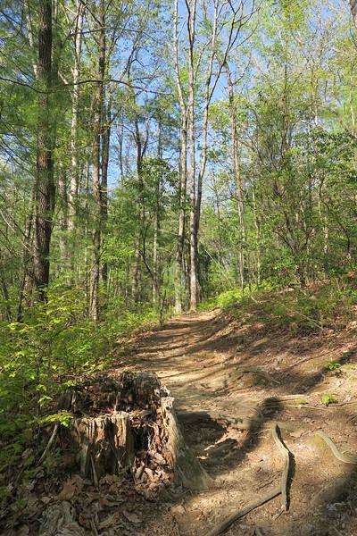 Bad Creek Spur Trail