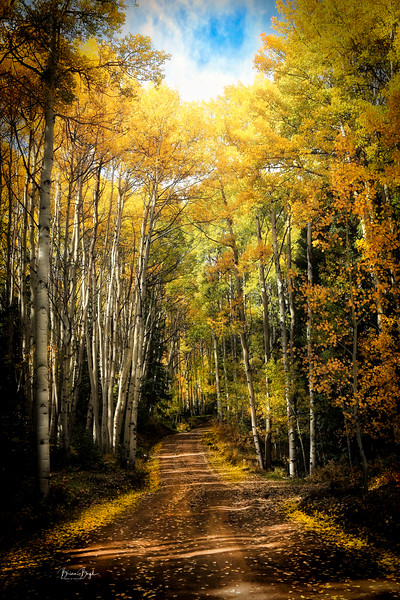 goldenmorningcr1.jpg
